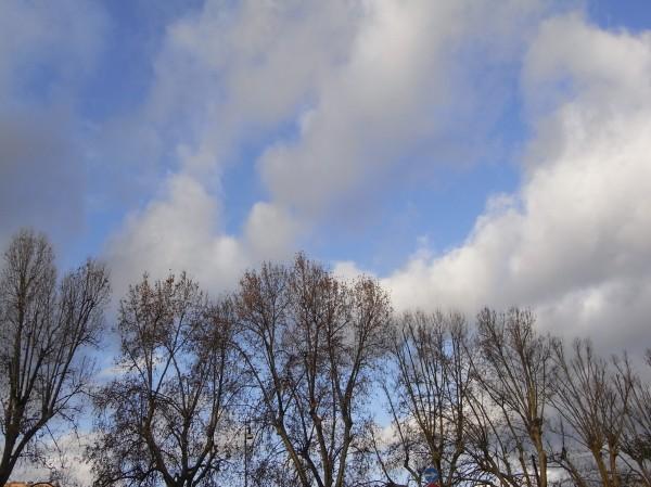 Diálogo de nubes y arboles en Roma.Foto R.Puig