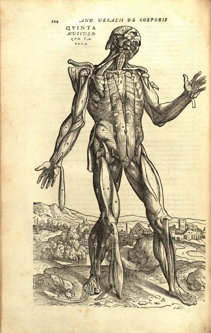 Anatomía artística | en son de luz