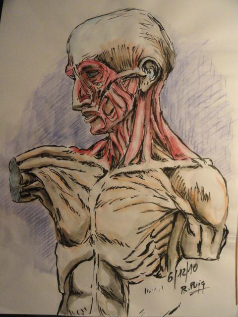 Sotto pelle o el decorticado. Dibujo de R.Puig.