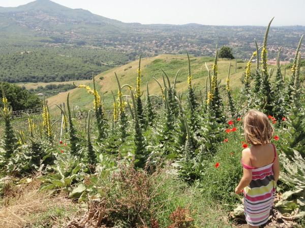 Desde la colina de Tusculum Foto R.Puig