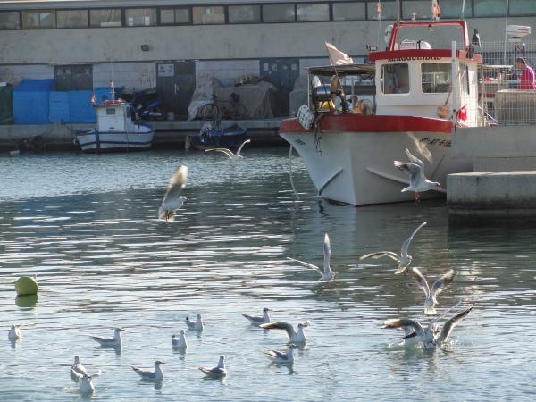 Denia. Enero 2013.Barco de pesca al amarre. Foto R.Puig.