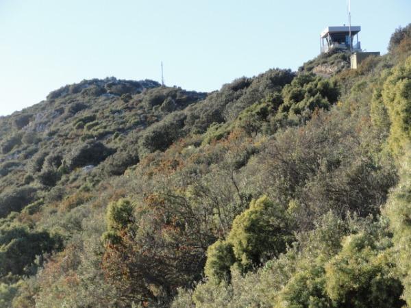 Subiendo a la sierra del Cocoll. Torreta forestal.Foto R.Puig