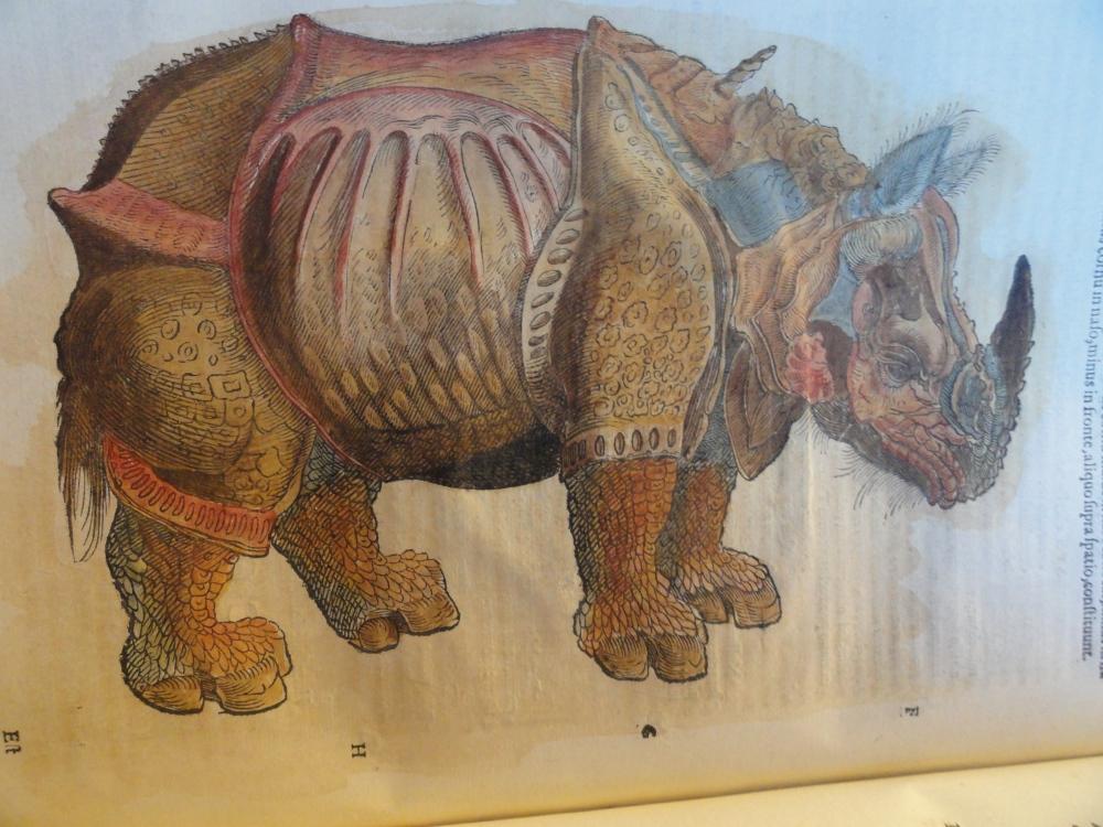 De las desgracias de Ganda, el rinoceronte enfermo que Durero inmortalizó  (4/6)