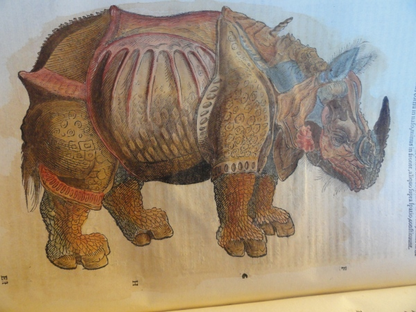 Rinoceronte asiático  Aldrovandi.1616
