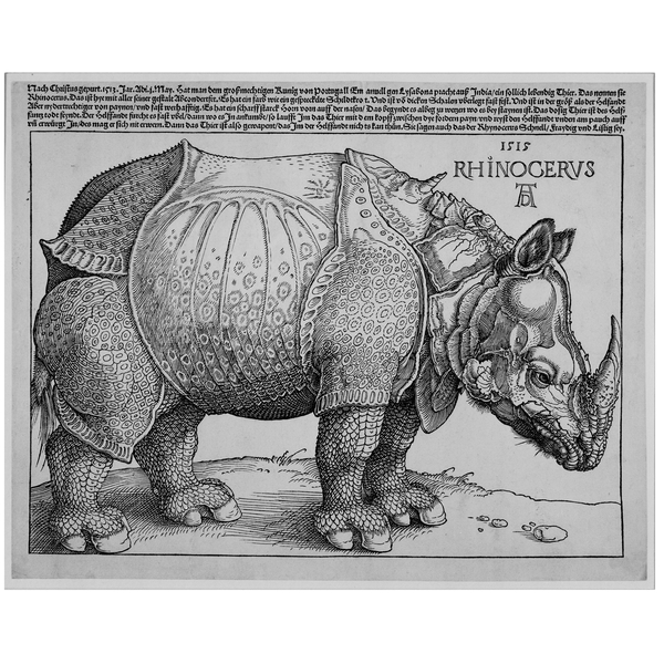 Rinoceronte asiatico. Durero. British Museum
