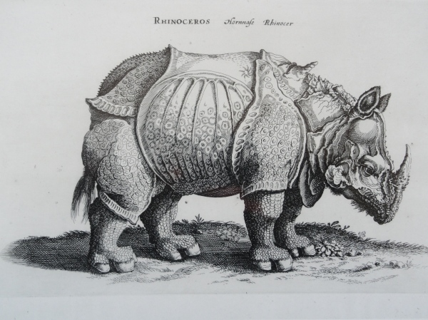 Rinoceronte asiatico Jonstonus. 1657. Biblioteca Vaticana