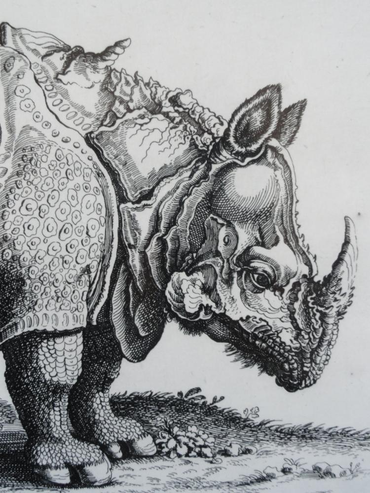 De las desgracias de Ganda, el rinoceronte enfermo que Durero inmortalizó  (3/6)
