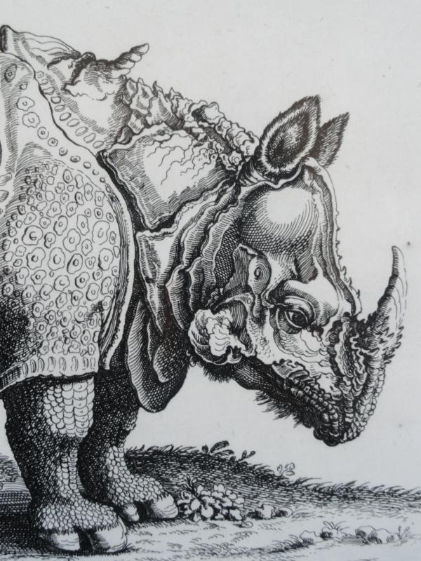 Rinoceronte asiatico Jonstonus. Biblioteca Vaticana.Detalle