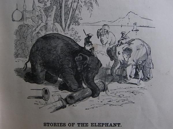Royal Readers III. Elefantes en faena. Foto R.Puig.J