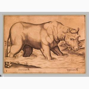 Tempesta Rinoceronte africano. Grabado en 1620 por De Rossi.