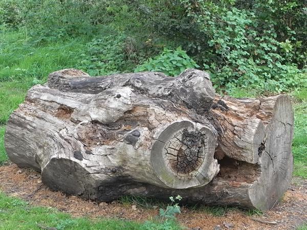En el parque.Leicester. Foto R.Puig