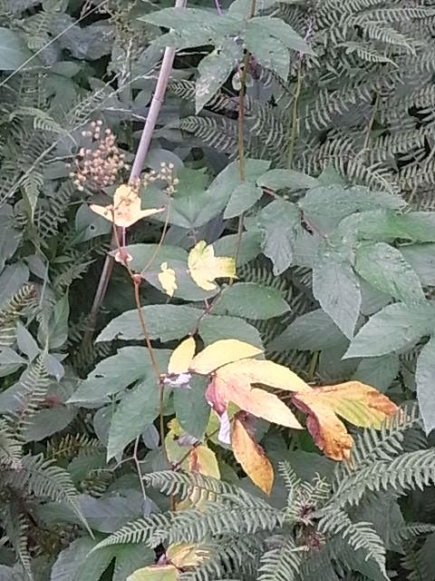 El otoño ya se anuncia en Nybro. Foto R.Puig.