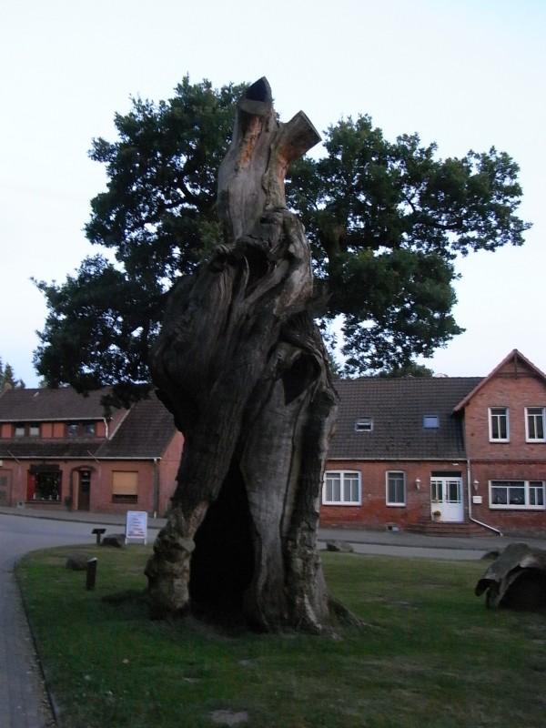 El roble milenario símbolo del pueblo. Dotlingen. Foto R.Puig.
