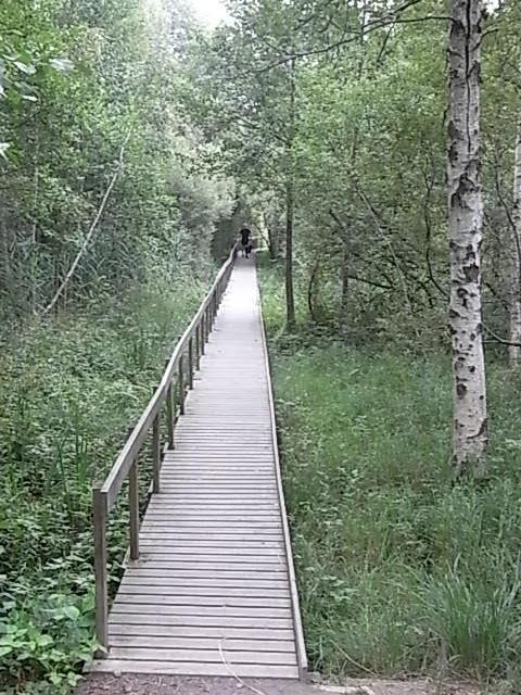 En el bosque de Nybro. Foto R.Puig.