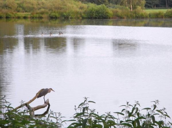 Un ave al acecho. Dotlingen. Foto R.Puig