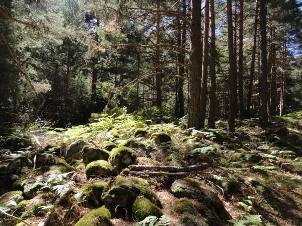 Por los bosques de Segovia. Foto R.Puig.