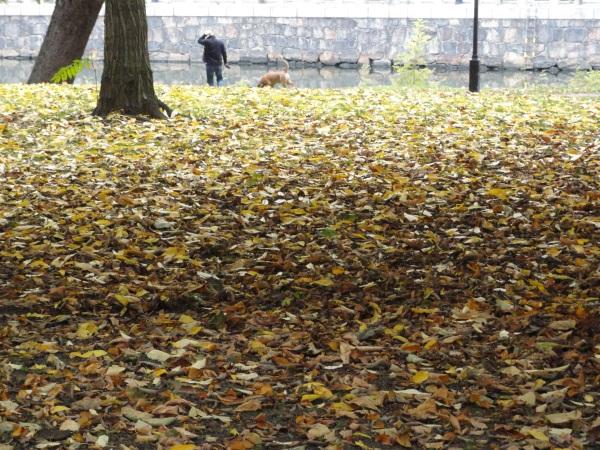 Hojas muertas. Gotemburgo. Foto R.Puig