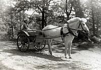 Astrid Petzäll y su caballo blanco en Råda Säteri.