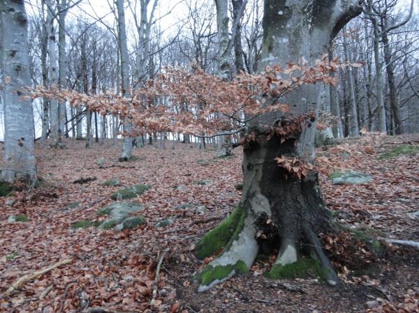 En el bosque. Råda Säteri.Foto R.Puig.