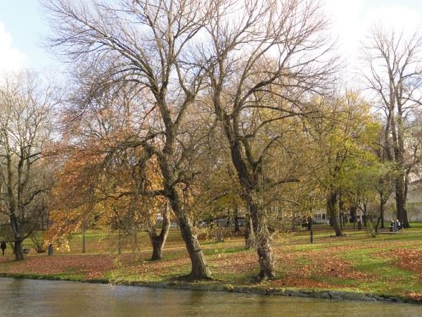 Noviembre a la vera del canal. Foto R.Puig.