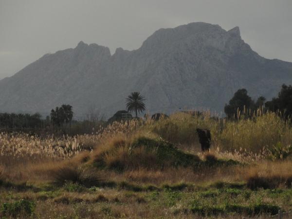 El Segaria desde La Marjal de Denia. Foto R.Puig
