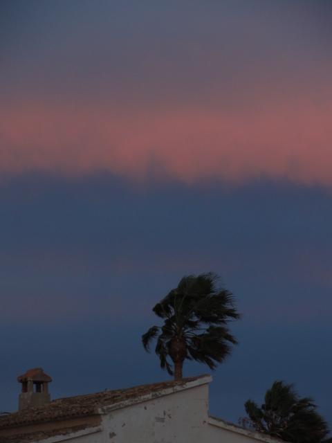 La palmera y lo rosa. Foto R.Puig
