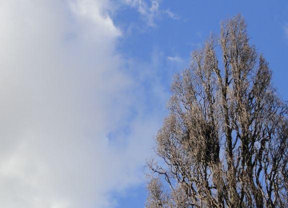 En primavera el nido espera su inquilino. Vasaparken. Gtb. Foto R.Puig