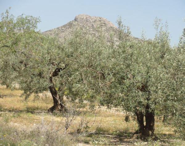 Olivares y el Tossal del Pelat. Foto R.Puig