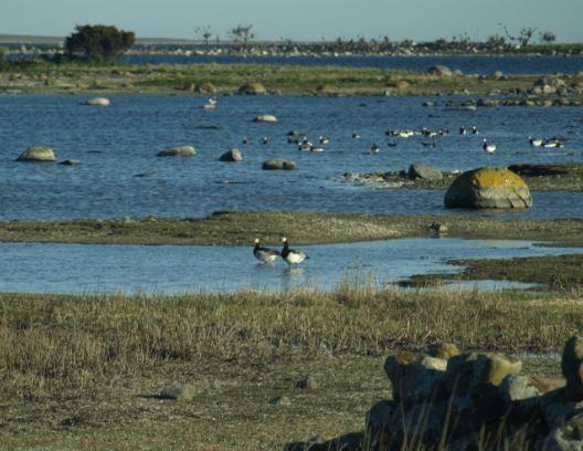 Costa de aves.  Foto R.Puig