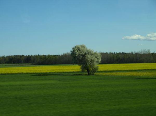 Por el norte de Gotland. Foto R.Puig