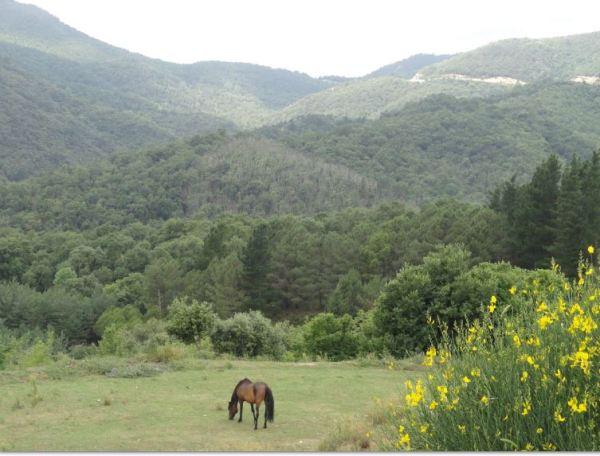En el Alto Ampurdán. Foto R.Puig