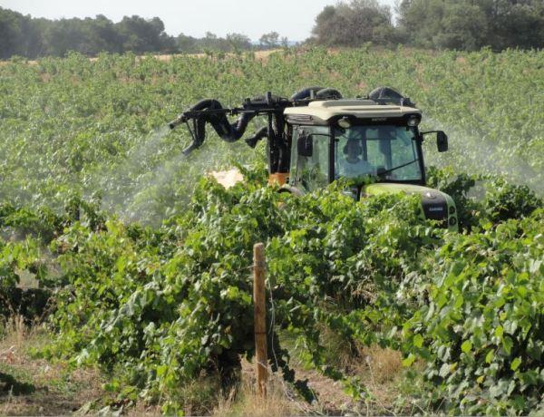 Viticultura semiorgánica en tierras de la abadía de Valmagne. Foto R.Puig.