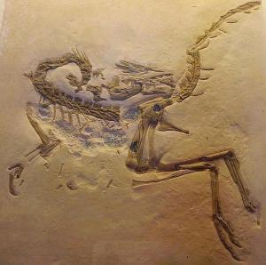 Compsognathus longipes.Foto G.Jansen en ABC Ciencia