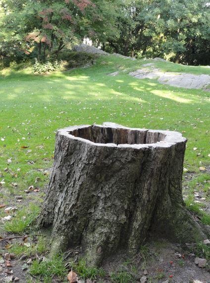 El árbol ausente. Foto R.Puig