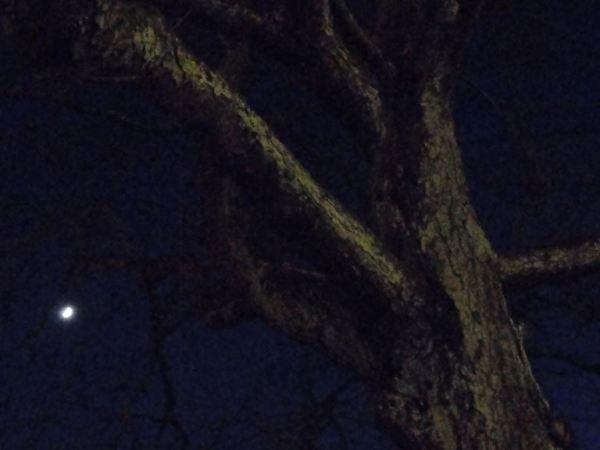 El árbol, el invierno y la luna. Foto R.Puig