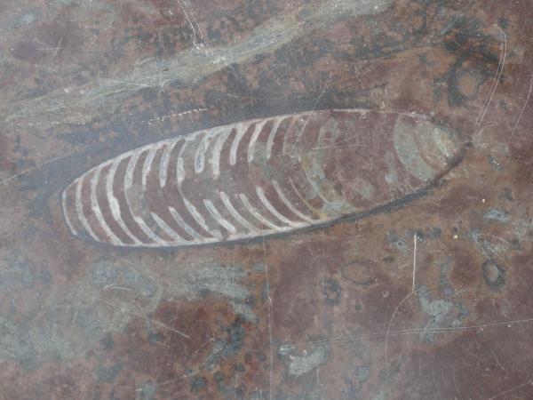 El fósil en el mármol. Palmhuset.  Gotemburgo. Foto R.Puig