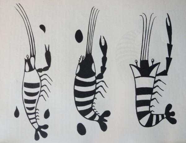 Imagen de camarones. Cultura Mochica.Perú 200 a 700 d.C. Dibujo Arturo Jiménez Borja