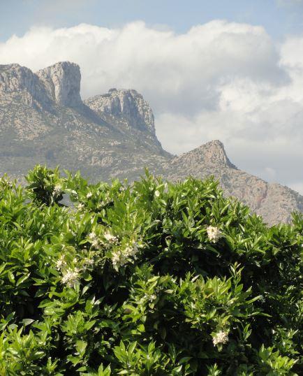 Roquedales del Segaria y la flor de azahar. Foto R.Puig