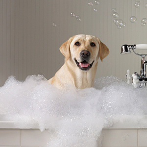 El perro en el baño. Fuente Head up for tails.blog