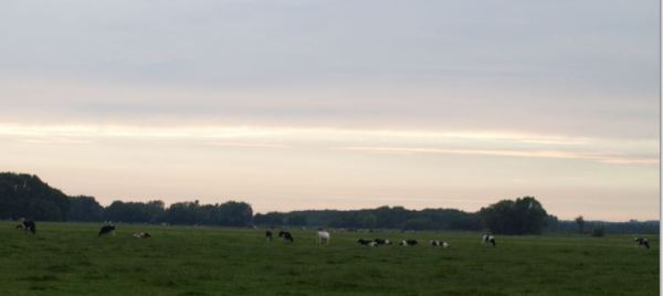 A la caida de la tarde cerca de La Haya. Foto R.Puig