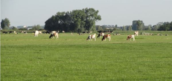 De mañanita cerca de La Haya. Foto R.Puig