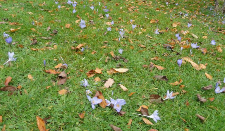 En estos días de otoño (3/6)