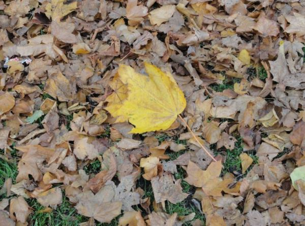 Hojas del arbol caidas.... Foto R.Puig