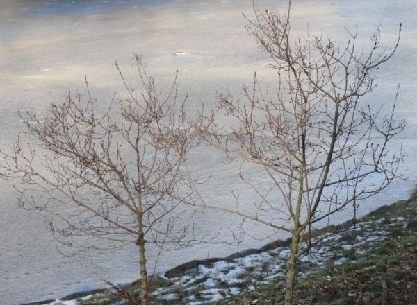 Formas del invierno. Foto R.Puig