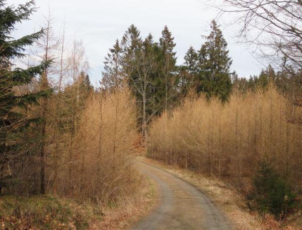 Despunta la primavera. Åkulla. Halland. Foto R.Puig