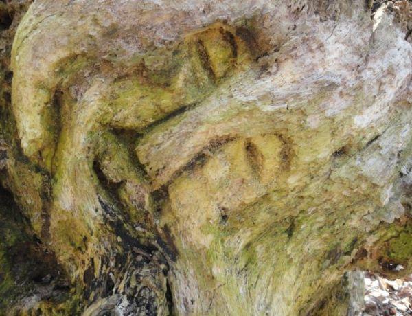 El anciano duende. Dalby. Parque Nacional de Söderskog. Foto R.Puig