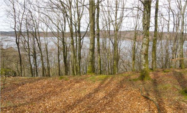 En los bosques de Åkulla. El Skärsjön. Halland. Foto R.Puig