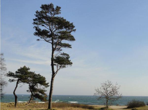 En el extremo Sur de Suecia. Foto R.Puig