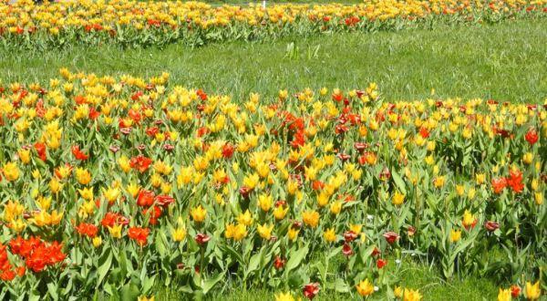 Despliegue rojogualda. Botánico.     Gotemburgo. Foto R.Puig