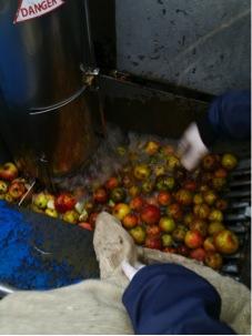 Lavado de las manzanas. Foto J. López Krahe.